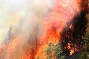 برزیل: آمریکا برای مهار آتش سوزی در جنگلهای آمازون کمک خاصی نمیکند