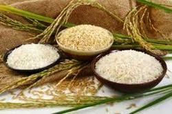 احتکار برنج خارجی تکذیب شد