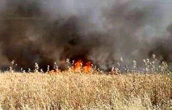 ادامه آتش سوزی مزارع گندم و جو سوریه