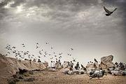 نقشه قبرهای بزرگان اسلام در قبرستان بقیع/ عکس