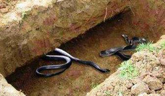 کسانی که به فرموده امام علی(ع)، 99 اژدها در قبر عذابشان خواهند داد