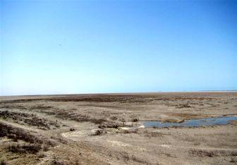 هشدار یک کارشناس محیط زیست نسبت به وضعیت ناگوار تالاب گمیشان