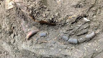 کشف اسکلت ۱۲ هزار ساله کودکی در غار هوتو مازندران