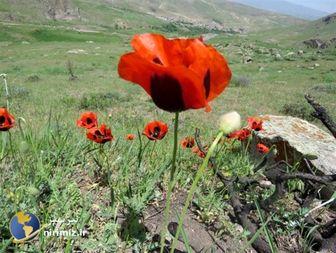 طبیعت زیبای روستای ایلانجیق نیر به روایت تصویر