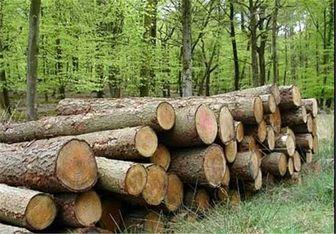 زراعت چوب به جای کشت سبزی در زمینهای آلوده جنوب تهران