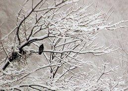۱۰ بیماری شایع در زمستان