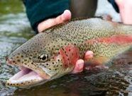 ماهیها درد را احساس نمیکنند
