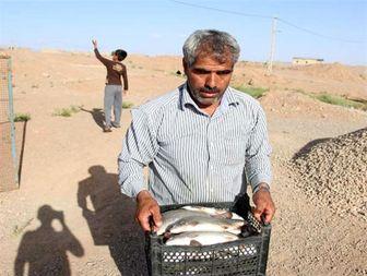 پرورش و صید ماهی دو بار در سال در صورت حمایت مالی دولت