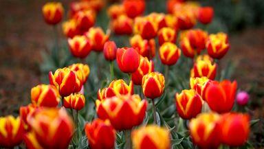 باغ گل لاله کرج