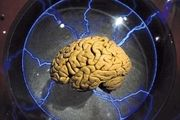 خوراکیهای مفید و مقوی برای تقویت مغز