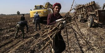 حقوق کارگران نیشکر هفتتپه فردا واریز میشود