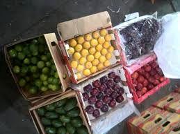 انتقال میوههای ممنوعه به شهرستانها