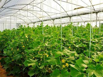 10هکتار گلخانه برای احداث در دستور کار قرار دارد