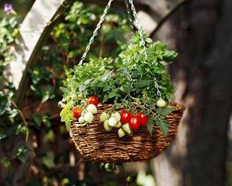 رمز و رازهای پرورش سبزیجات در خانه
