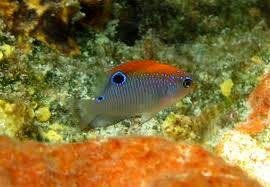 روش عجیب «دوشیزه ماهیها» برای فرار از دشمن