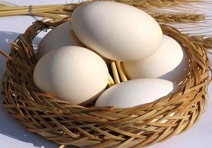پسر عجیبی که مانند مرغ، تخم میگذارد/عکس