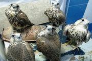 آمار برخورد با قاچاق پرندگان زیاد است