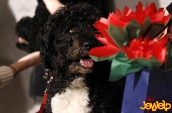حمله سگ بانوی اول آمریکا به یک کودک + تصاویر