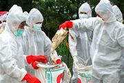 آلودگی ۱۰کانون به آنفلوانزای پرندگان