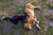 مهربانی یک شکارچی/ عکس