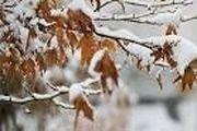 برف و باران میهمان این هفته مردم ایلام