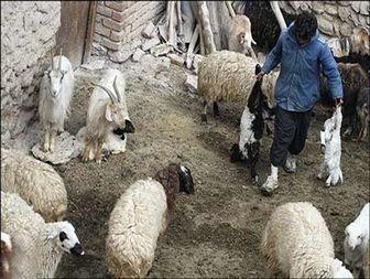 تب برفکی بلای خانمان سوز روستائیان بیجار