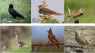 همه چیز درباره مهاجرت پرندگان