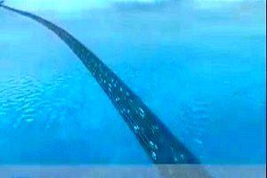 بزرگراهی زیبا و دیدنی در زیر آب/ فیلم