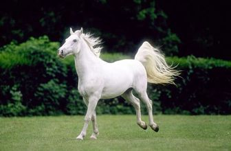 از شباهت اسب و انسان چه میدانید؟!