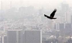 هوای آلوده تهران با ورق زدن تاریخ پاک نمیشود