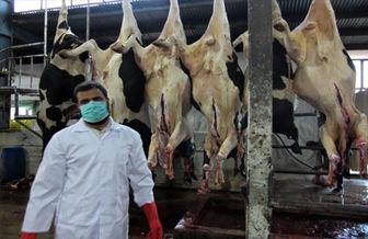 مستحبات سر بریدن حیوانات حلال گوشت