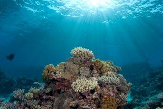 نابودی محیط زیست دریایی به خاطر لوازم آرایشی